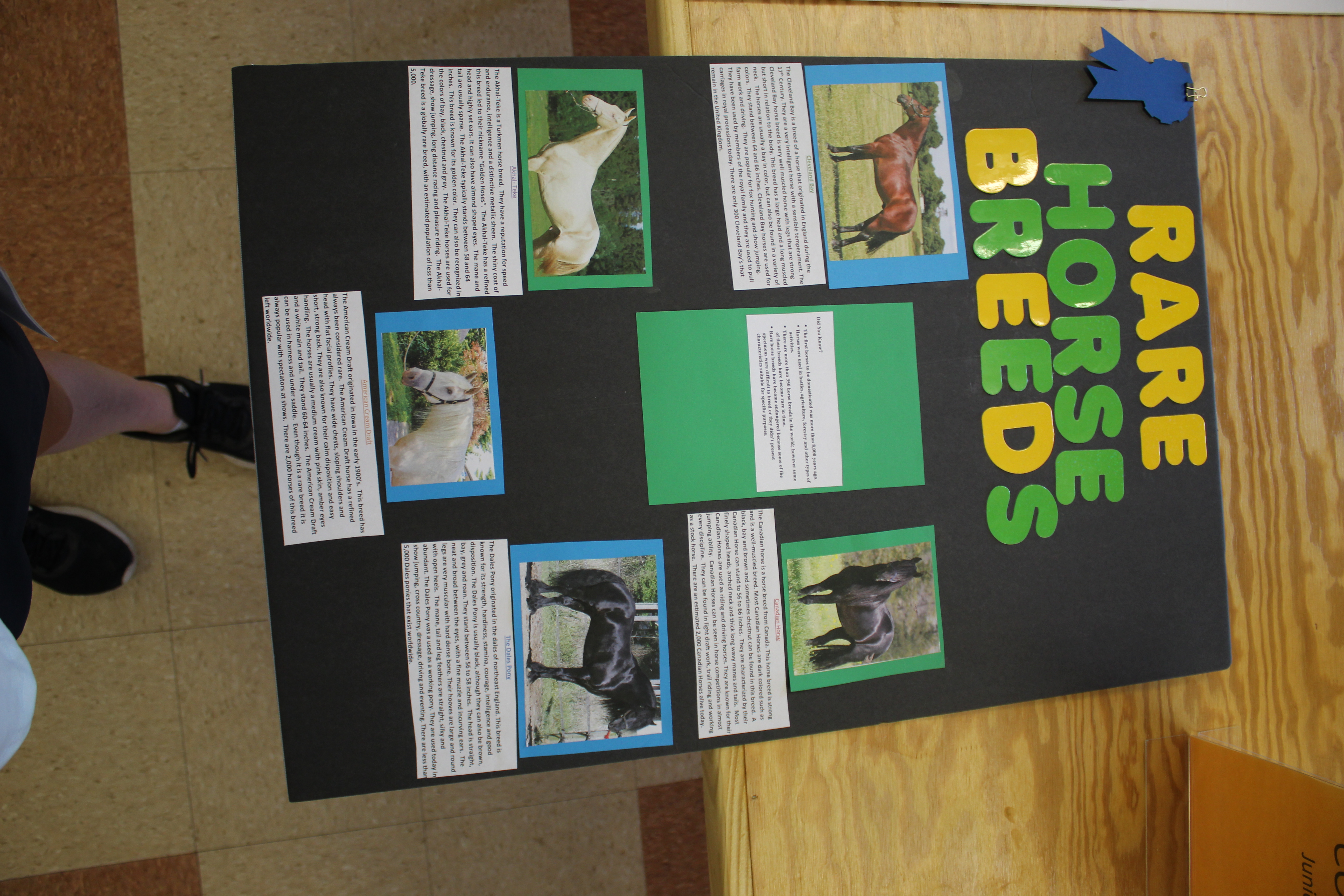 Rare horse breed poster project