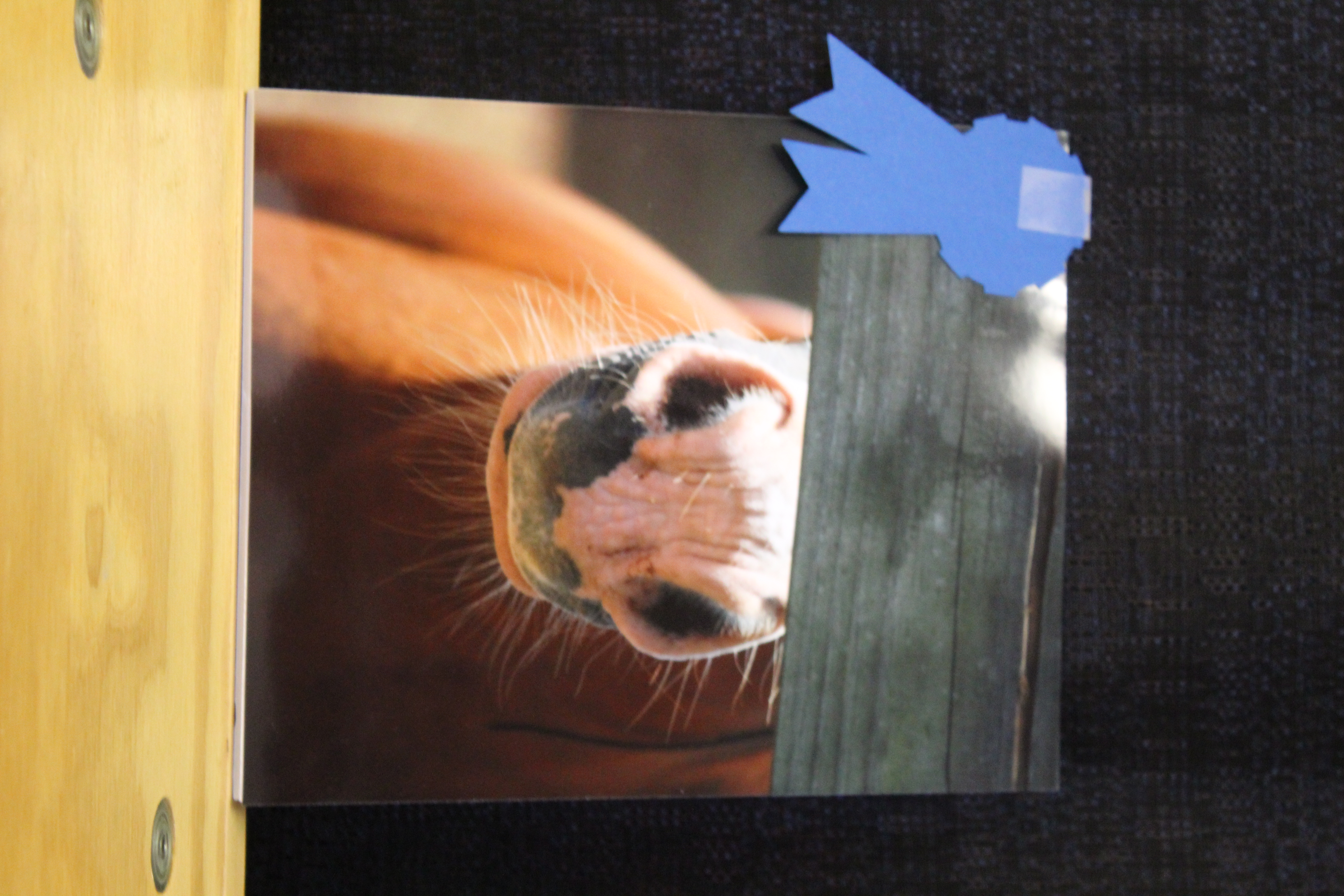 Photo of a horse nose